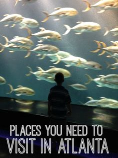Discover some pretty spectacular places you need to visit in Atlanta. The city has so much to offer! #Atlanta #GeorgiaAquarium