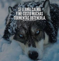 Motivational Phrases, Inspirational Quotes, Der Steppenwolf, Cool Words, Wise Words, Mi Images, Wolf Quotes, Millionaire Quotes, Leadership Quotes