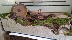 Syrische hamster in terrarium of toch gewoon traliekooi? Hamster Tank, Hamster Diy Cage, Gerbil Cages, Hamster Life, Baby Hamster, Pet Cage, Gerbil Toys, Hamster Stuff, Hamster Terrarium