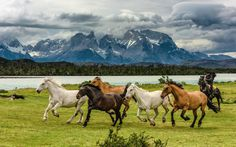 We got extremely lucky to witness some horses running on a farm next to Torres Del Paine national park. Living and farm lands are prohibited on the park premises, but just outside of the park you can find a few remaining farmers, living simple life — part raising livestock, part feeding tourists. Thank you for viewing and liking this, it means a lot to me. Happy holidays!