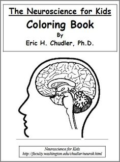 Neuroscience Coloring Book for Kids #homeschooling #science #biology #teach