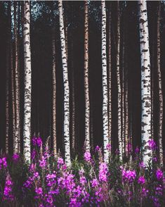 Summer in Finland. Photo by Janni Laakso. Nature Pictures, Cool Pictures, Finland Summer, Picking Wild Flowers, Jungle Tree, Forest Flowers, Spring Aesthetic, Tree Leaves, Four Seasons