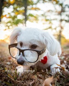Hipster Puppy!