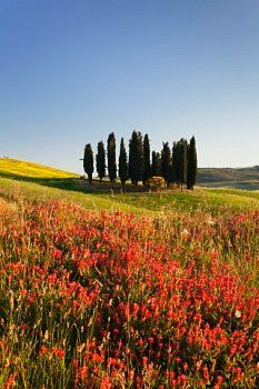 San Quirico, Val d'Orcia, UNESCO World Heritage Tuscany, Siena Italy