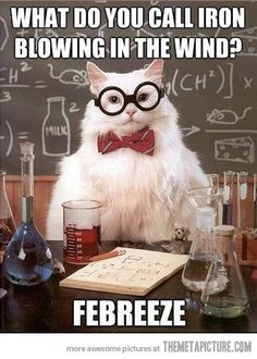 It's funny because it's true. Gunter (I tag you in my geeky science stuff because I know you'll laugh with me, not at me. At least I think you do. Humor Nerd, Nerd Jokes, Cat Jokes, Cat Puns, Cats Humor, Corny Jokes, Geek Humour, Cheesy Jokes, Stupid Jokes