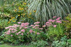 *Garten-Liebe*: der Garten holt sein Herbstkleid hervor...