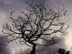Barren tree silhouetted against dark monsoon clouds