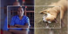 A state government official Vimal Dheer from Uttar Pradesh allegedly shot a stray dog because it was barking at him. Read Here https://goo.gl/yNcp5Q