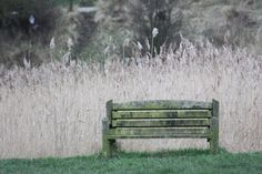 park bench on a winters day, Burnham on Crouch