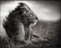 I absolutely love Nick Brandt's series of outstanding safari pictures