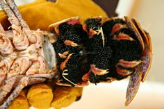Entertaining > lobster reveillon feast by Heidi Leon Monges (www.aromasnsabores.com)