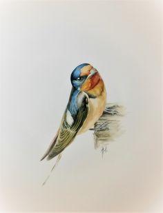 Akwarela ptak jaskółka dymówka 32/24 cm