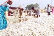 Economy: This picture is a picture of people working on a field taking cotton and exporting it. India has a lot of exports and imports. Some of their exports are jewellery, refined petroleum, rice, cars, and raw cotton. Some of India's imports are crude petroleum, gold, palm oil, scrap iron, and telephones.