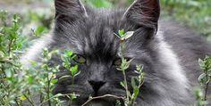 cat cat 5