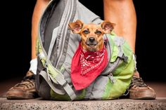 © Norah Levine Photography | Lifelines Project:  Honoring the bond between the homeless and their pets