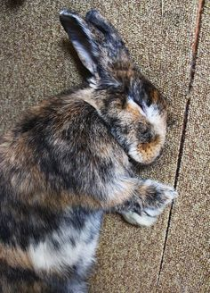 It Doesn't Take Much More than a Flop to Lull a Bunny to Sleep
