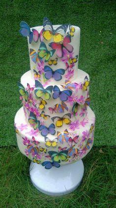 Butterflies  by Daniel Guiriba