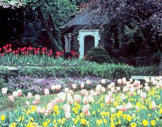 Duke Gardens in Durham, NC - lovely in all four seasons but especially in spring
