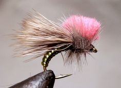 Learn how to tie the Clown Shoe Caddis in seven steps.