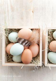 Heatherbullard_eggs-4
