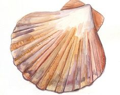 Popular items for scallop sea shell on Etsy Watercolor Ocean, Watercolour Painting, Painting & Drawing, Watercolors, Stone Painting, Seashell Painting, Seashell Art, Art Plage, Shell Drawing
