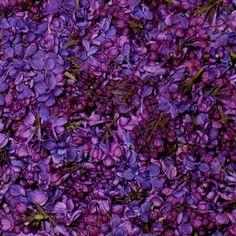 freeze dried flower petals