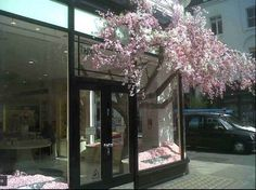 Tree inside out Cherry Blossom Tree, Blossom Trees, Store Window Displays, Jo Malone, Visual Display, Chelsea Flower Show, Store Windows, Gift Store, Store Fronts