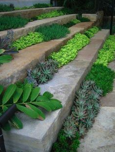 drought tolerant succulents. cool idea if you can keep them small.