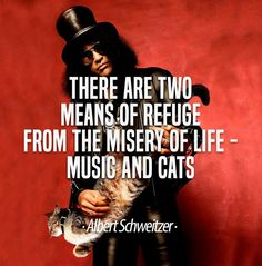 There are two means of refuge from the misery of life - music and cats. Albert Schweitzer #cats #quote #life #saying #music #musician #cats #meme #cat #funny #stuff #slash