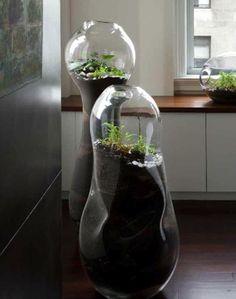 98 Best Glass Terrariums Images Flowers Indoor House Plants