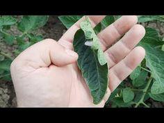 Plant Leaves, Plants, Agriculture, Plant, Planets