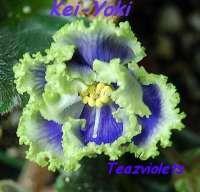 Kei-Yoki – (Horikoshi/Shinohara) Semidouble-double white and blue frilled star/variable green edge. Medium green, quilted, glossy, wavy/red back.