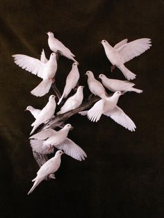 12 pure white doves taxidermy, real bird feathers, perfect for weddings, florists, photographers. Purchase individual or multiples Love Birds, Beautiful Birds, Dove Images, Pure White, Black And White, Dove Pigeon, White Pigeon, Frida Art, White Doves