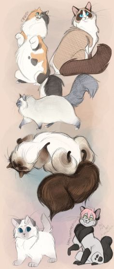 Moar kawaii ragdolls by Vanimute.deviantart.com on @deviantART