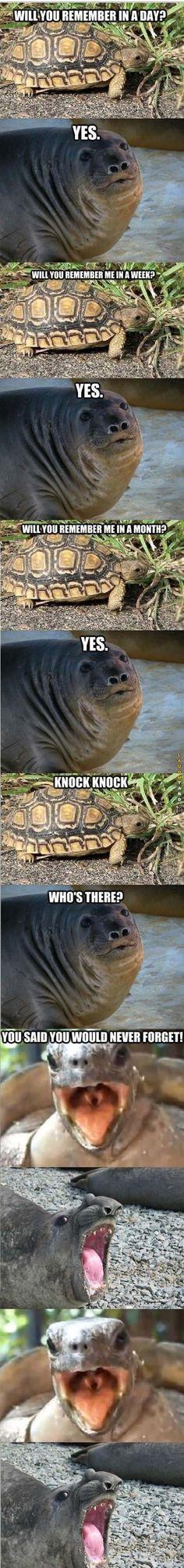 Knock Knock #jokes #funny #group