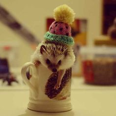 A crafty hedgehog in a mug. | 25 Animal Pictures That Will Restore Your Faith In Animals