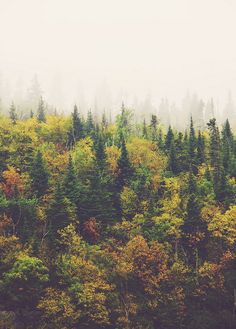 Landscape / Image via: five one nine, via Flickr #fall #autumn #calm