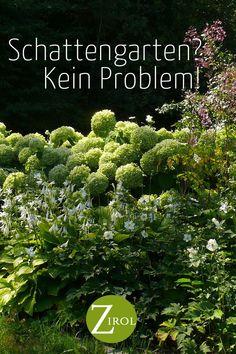 Beautiful Flowers Garden, Garden Cottage, Hydrangea, Outdoor Gardens, Wild Flowers, Outdoor Living, Herbs, Exterior, Low Light Plants