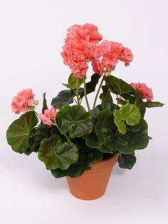 kunst geraniums