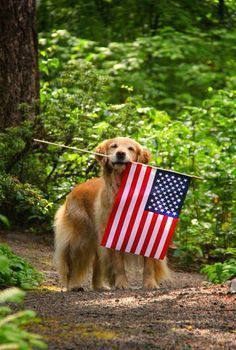 The brave, selfless, and devoted military dogs who are killed in action while protecting our troops deserve to be honored along with the human soldiers who have fallen in battle. Take some time to remember and thank them as you enjoy this Memorial Day. I Love America, God Bless America, American Pride, American Flag, American Spirit, Patriotic Pictures, Doodle, Killed In Action, Military Dogs