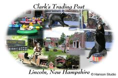 Love Clark's Trading Post NH. Visit the bears every summer!