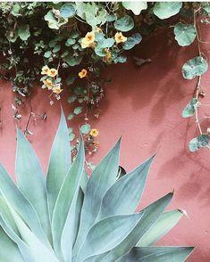 @plantsonpink