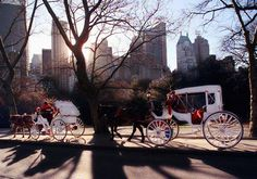 carriage ride:)  SO cute