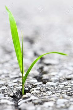 Green Grass Growing From Crack In Old Asphalt Pavement Stock Photo, Picture And Royalty Free Image. Pic 3628521.