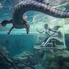 Crocodile experience Part 2  Would you do this?! Follow @lavidaluxe for great posts.  by unknown (dm) All rights and credits reserved to the respective owner(s) #crocodile#goals