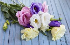 Looking for beautiful flowers that will thrive in a vase despite the summer heat?  Try beautiful and long lasting lisianthus.
