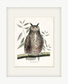 Great Horned Owl Art Print Natural History  by HighStreetVintage, $15.00