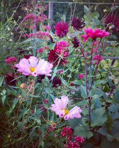 "310 Likes, 4 Comments - Venkel & Vlier garden design (@silviadekker) on Instagram: ""Some summer garden inspiration from our garden... Looking forward to a wonderful easter weekend…"""