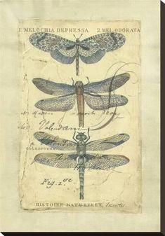 Stretched Canvas Print: Dragonfly Ephemera Canvas Print by Chariklia Zarris : 26x18in