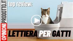 ⫸La migliore Lettiera per Gatti Autopulente o Classica deve avere queste Caratteristiche del 2020 Cats, Animals, Gatos, Animales, Animaux, Animal, Cat, Animais, Kitty